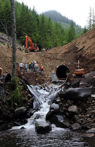"In a U.S. Forest Service project nicknamed ""the Big Dig,"" contract crews removed nearly 100 vertical feet of road in the South Fork of the Skokomish watershed to remove an eight-foot culvert. The work allowed a mountain stream to flow freely into the Skokomish River. Photo: Kitsap Sun, Steve Zugschwerdt."