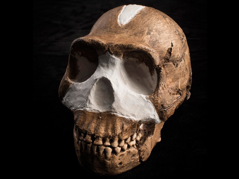 Homo naledi Photo: John Hawks, Wits University