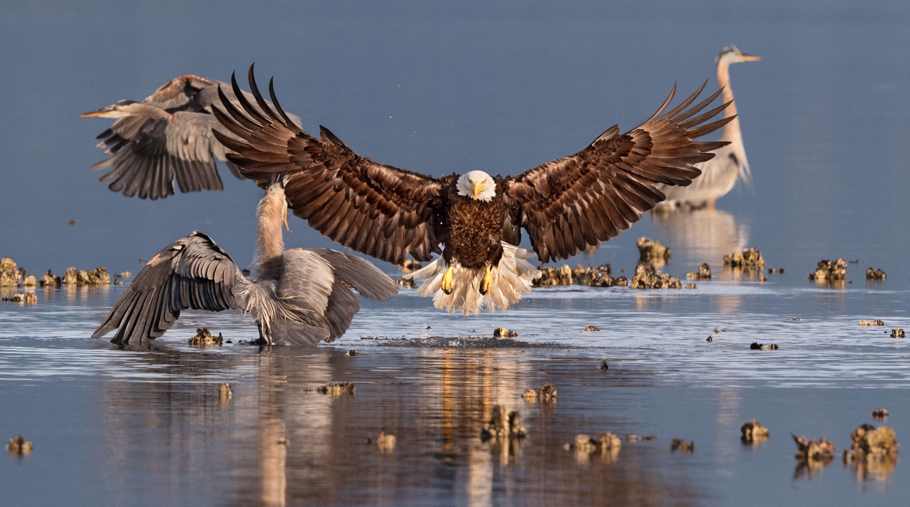 Bonnie Block's winning photograph in the 2016 National Audubon Photography Contest