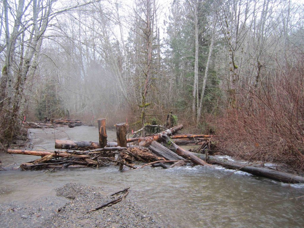 Large woody debris placed in Big Beef Creek last summer has begun to form pools where salmon can escape the strong current. Photo: Hood Canal Salmon Enhancement Group