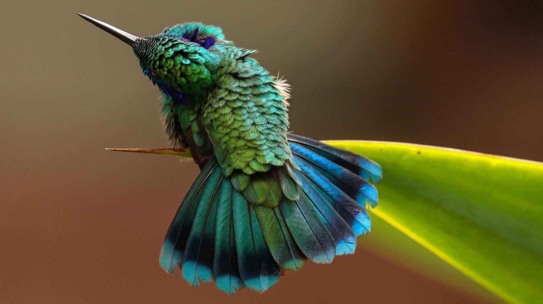 Fine Arts Division winner: Barbara Driscoll, green violetear, Savegre Hotel, San Gerardo de Dota, Costa Rica.
