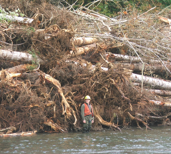 Logjam soon after installation in 2010. Photo: U.S. Forest Service
