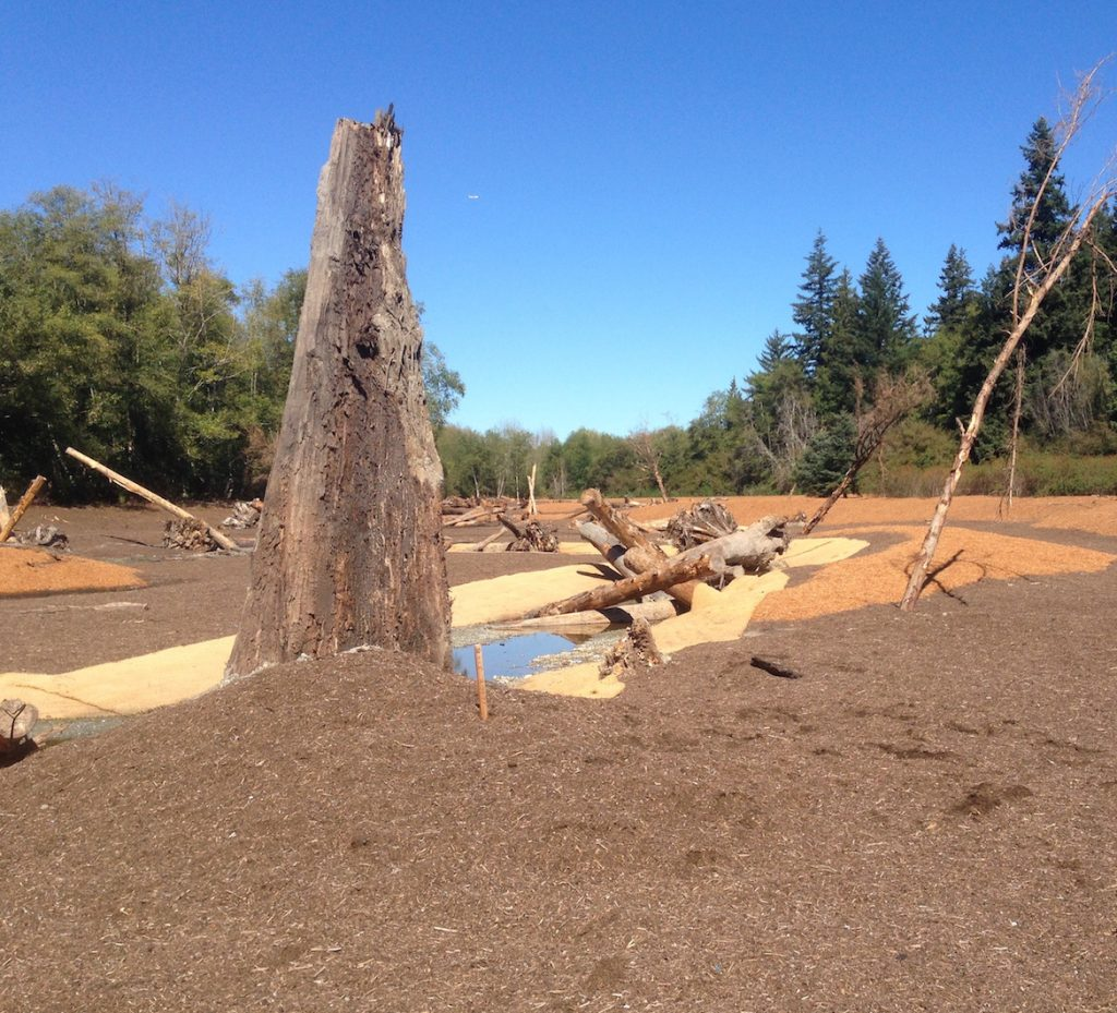 An old cedar log was recovered during excavation for a new channel for Clear Creek. Photo: Dunagan